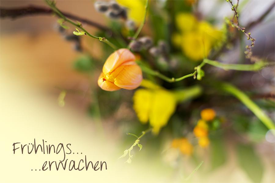 Frühlingserwachen in Stöckse