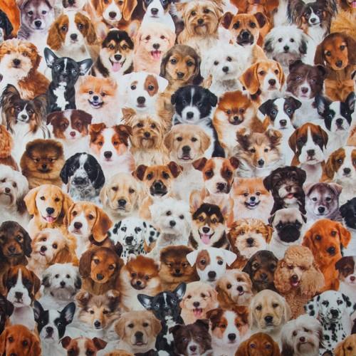 Neckels Living Hundewelpen BB/Hunde-312